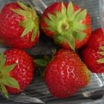 27_08_14 Realschule Wolbeck Erdbeeren