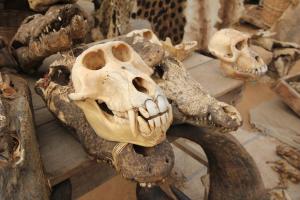Affenschädel am Voodoo Fetisch Markt, Togo, Afrika